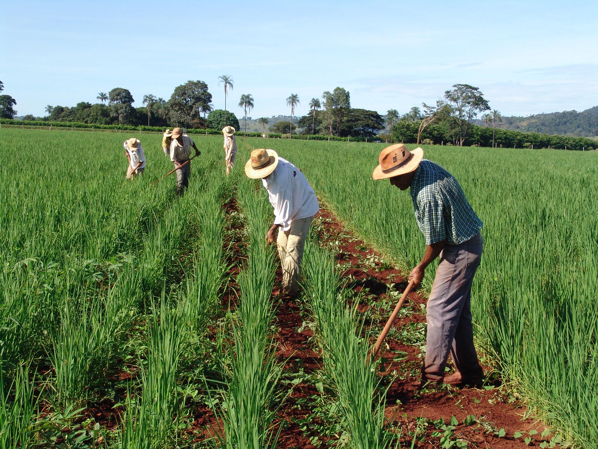 Mais recursos para pequenos produtores