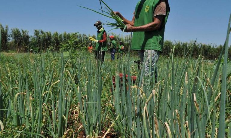 Recursos para técnicas agrícolas sustentáveis